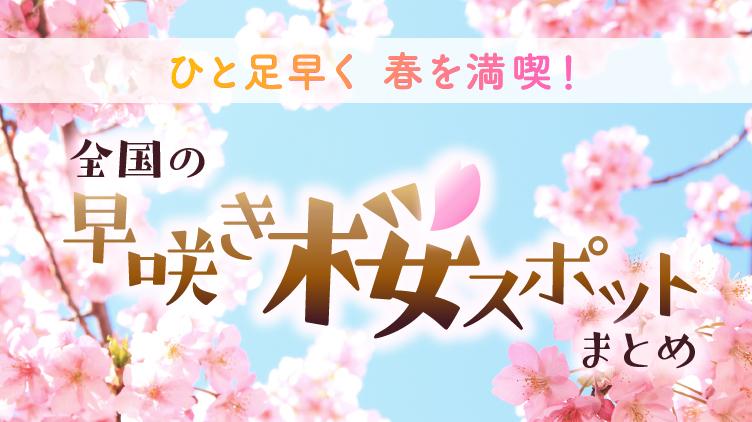 春はもうすぐそこ!今見頃の桜を見に行こう
