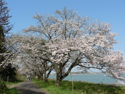 青島 (鳥取県)