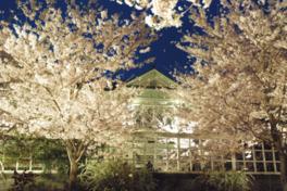 【桜・見頃】神戸市立王子動物園