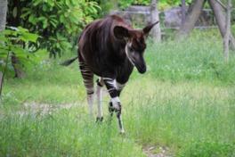 園名は動物園(ZOO)とユーラシア(EURASIA)の合成語