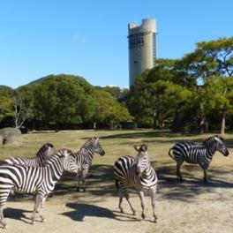 動物園では150種類以上の生き物を飼育している