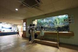水生物館では、日本産淡水魚や両生類の飼育展示、保護繁殖を行っている