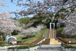 【桜・見頃】久峰総合公園