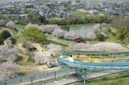 【桜・見頃】岡岳公園