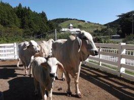 千葉県酪農のさと