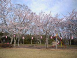 【桜・見頃】羽黒山公園