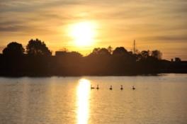 池の夕景。池にはハクチョウ他、カモなどの水鳥も生息