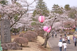 【桜・見頃】城山公園