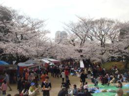 【桜・見頃】亥鼻公園