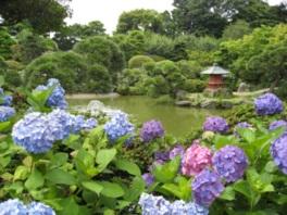 約60種6000株のアジサイが咲き誇る