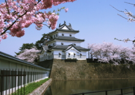 新発田城址公園は桜の名所としても有名
