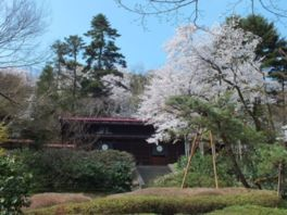 【桜・見頃】富山市民俗民芸村