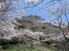 【桜・見頃】岩殿山丸山公園