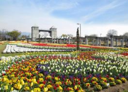 春のフラトピア大花壇は素晴らしいのひと言