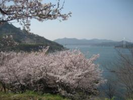 【桜・見頃】能島