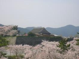 城の内外およそ1000本の桜が華やかに彩る