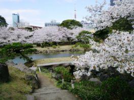 【桜・見頃】旧芝離宮恩賜庭園