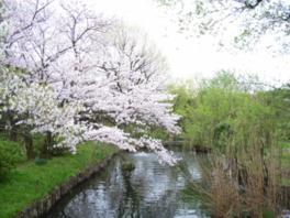 【桜・見頃】向島百花園