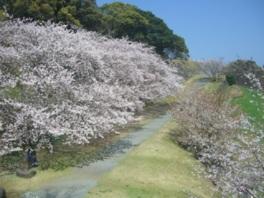 春には桜の名所としても人気のスポット