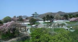 春には約1万本の桜が城内を彩る