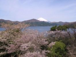 芦ノ湖と富士山の絶景と一緒に桜...