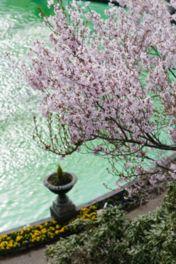 希少な桜も楽しめる、花の名所