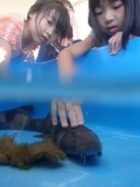 動物ふれあい教室「サメにどきどきタッチ」