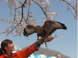 バードフライショー ~大自然の中!感動的な大空の舞!~