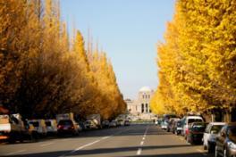 壮大な姿のイチョウ並木の紅葉と聖徳記念絵画館