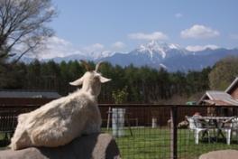 八ヶ岳ウエスタン牧場