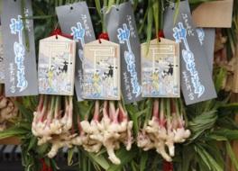11日間だらだら続く歴史ある「生姜祭り」