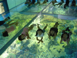 「さんごの海」水槽で海面浮遊体験