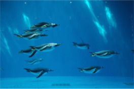 ペンギン繁殖の先駆けとして有名で、繁殖に成功した種類数でも日本屈指
