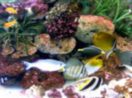 わくわく海中水族館 シードーナツ