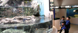 五ヶ瀬川水系の淡水魚や日向灘の珍しい魚を展示