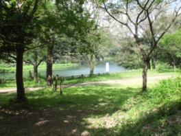 湖畔の緑に囲まれたキャンプ場