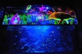 関西の水族館で初の3Dプロジェクションマッピング「アクアリウム・ファンタジー」