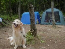 伊豆自然村キャンプフィールド