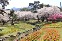 松林をはじめ芝生や季節ごとの美しい花々が咲く憩いの公園