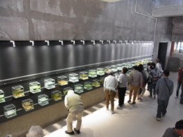 箱型水槽が並ぶおもしろ箱水族館は人気コーナーだ