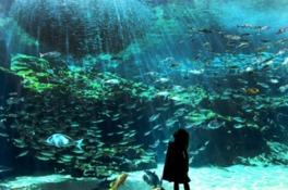 九十九島湾大水槽は沖合いから沿岸までの自然環境の変化と生きものを再現