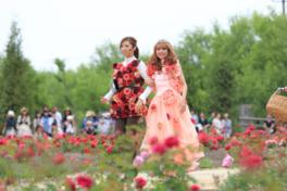 第9回 バラ祭り