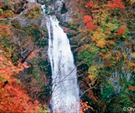 流れ落ちる滝と紅く染まった紅葉の見事なコントラストが楽しめる
