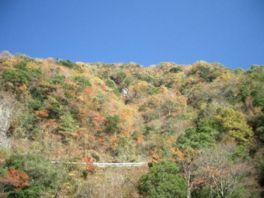 【紅葉・見頃】石鎚山(石鎚スカイライン)