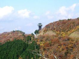 【紅葉・見頃】高野龍神スカイライン(国道371号線)(護摩壇山周辺)
