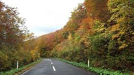 沿道の美しい紅葉を堪能