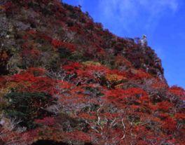 国の天然記念物にも指定されている色鮮やかな紅葉