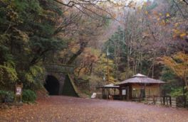 天城(旧天城トンネル周辺)