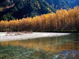 黄金色の木々が水面を鮮やかに彩る