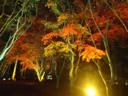 光に浮かび上がる幻想的な風景と園内の紅葉が楽しめる